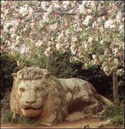 Le Lion d Ifrane