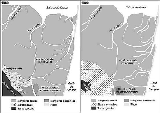 l'utilisation du littoral et des mangroves au profit de la crevetticulture