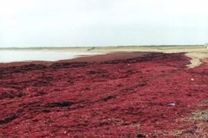 Ecologie. La qualité des eaux menacée par deux décrets favorables aux industriels. L'élevage intensif reprend du terrain