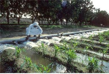 Irrigation du maïs en Arabie saoudite
