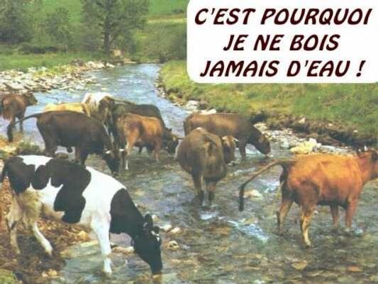 L'Express 'Bretagne : enfin l'eau pure '
