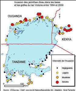 Le lac Victoria : entre pollution, maladie et bassin de vie