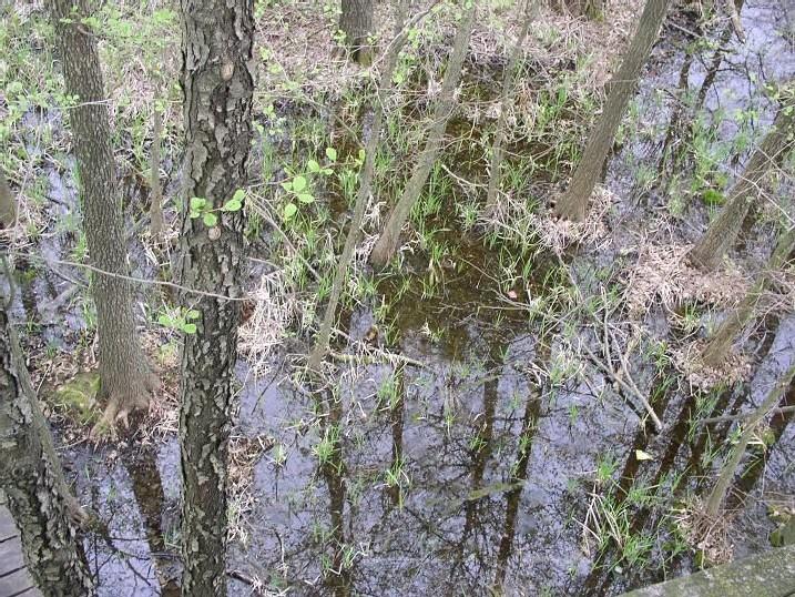 <font color='red'>USA :l'environnement divise la Cour suprême :</font> Supreme Court Split Over Wetlands Protections