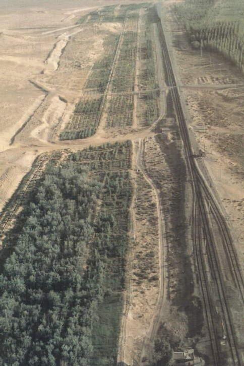 Des forêts pour réduire les tempêtes de sable