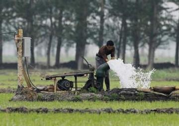 irrigation pour faire pousser du riz en plein désert