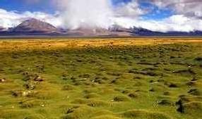 La végétation sur le plateau du Tibet est très fragile