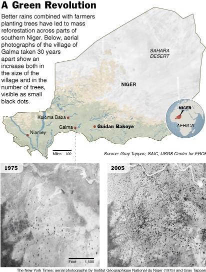 Au Niger, Arbres et Récoltes font reculer le Désert