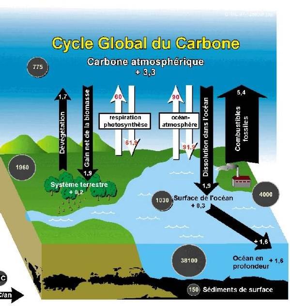 Un Equilibre chimique menacé ou l'acidification des océans