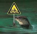 La souris au service de l'eau