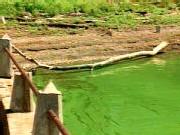 Les cyanobactéries sont parfois de couleur verte