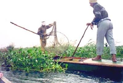 Chine: des scientifiques préconisent la plantation de mauvaises  herbes pour combattre l'algue bleue-verte qui envahit les lacs