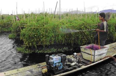 Photo: AFP] Un maraîcher de la tribu Intha aspergeant de pesticide un jardin flottant sur le Lac Inlay